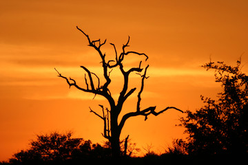 african sunset 2