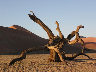 decaying in the namib desert