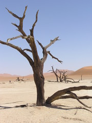 deadvlei in the namib desert