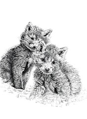 baby fox cubs