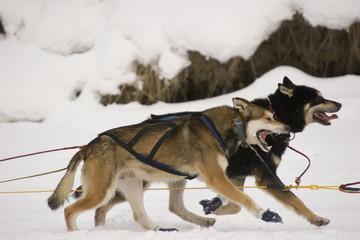 winter teamworks