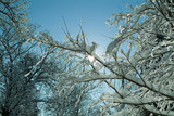 backlit tree branches covered in ice and snow poster