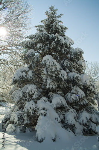 poster of snow covered pine tree