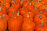big pumpkins poster