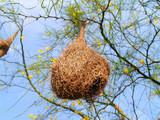 bird nest 02 poster