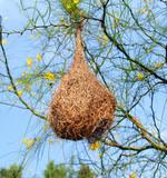bird nest 01 poster