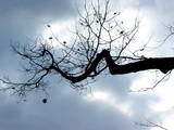 winter tree branch poster