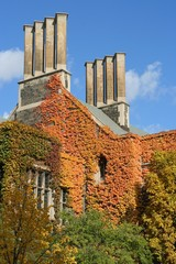 fall ivy and chimneys