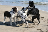 3 dogs playing on the beach poster