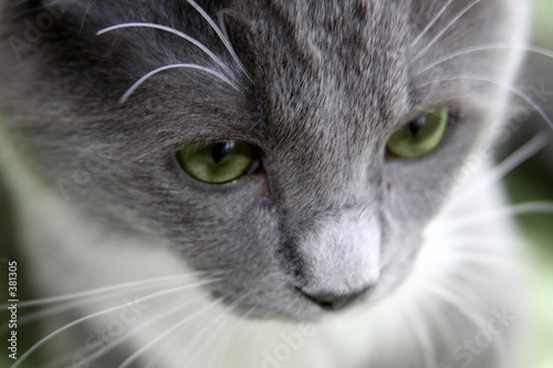 poster of sad cat with green eyes
