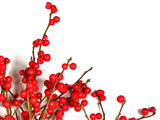 red christmas berries on white 1 poster