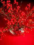red berry tree branches in a vase poster