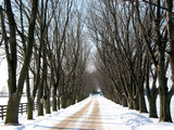 winter tree lined lane 2 poster
