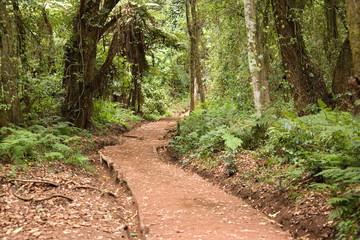 kilimanjaro 003 forest