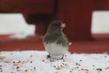 bird & snow poster