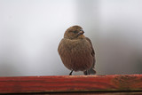 bird resting poster