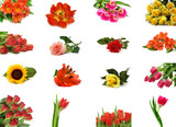 Fototapety isolated flower collection