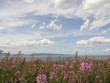 pink flowers and sky at ile-aux-lièvres island