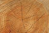 tree rings poster