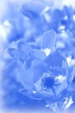 soft blue floral background 2 poster