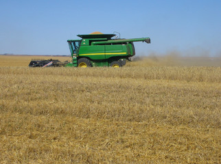 harvesting wheat in saskatchewan