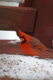 bird & snow5 poster