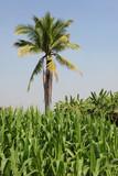 tropical farming poster