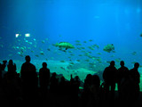 aquarium in atlanta poster