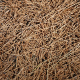 background - dried grass poster