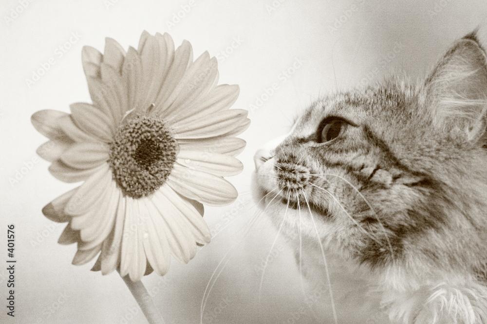 gerber zwierzę still-life - powiększenie