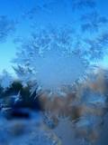 natural snowflake poster