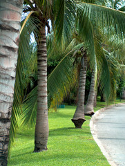 palm-alley