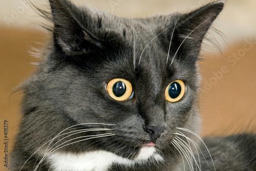 cat litter box spray