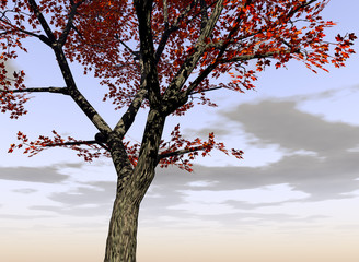 maple tree 2