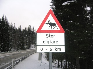 moose danger sign