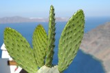 cactus plant with the sea on the background poster