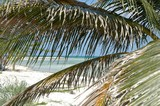 beach through the palms, freeport, bahamas islands poster