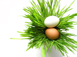 easter eggs in grass on white