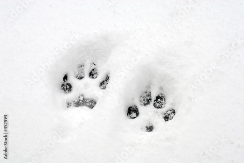 poster of dog pawprints