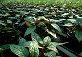 plantes poster