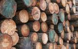 hewn timber poster