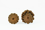 pine cone patterns poster