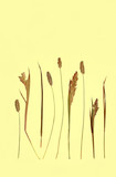 dried grasses poster