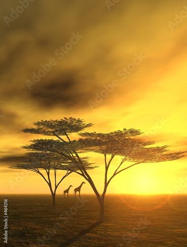Leinwanddruck Bild abendstimmung in afrika