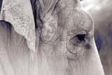 Fototapete Wrinkles - Kniffeln - Säugetiere