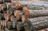 timber logs poster