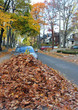 fall street scene, pile of leaves