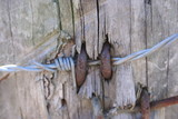barbed wire on a fence post poster