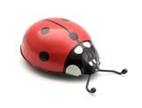 toy ladybug poster
