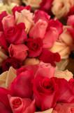 bridal roses poster